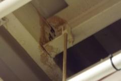 Flat Roof Drain Leak
